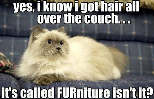 Cat Logic 7