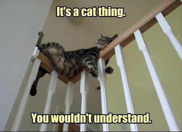 Cat Logic 10