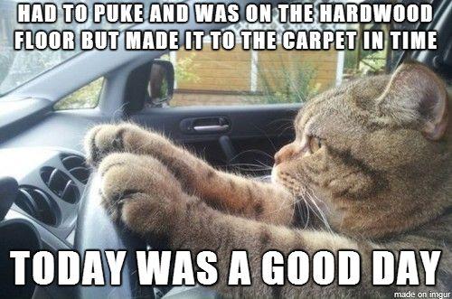 Cat Logic 5