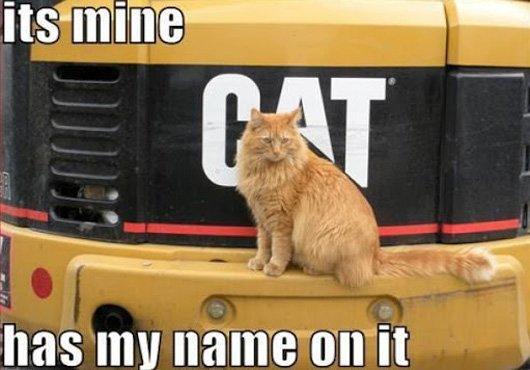 Cat Logic 6